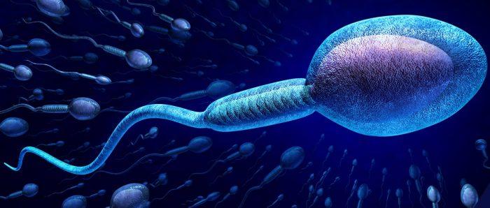 تضعیف اسپرم و عواملی که سبب آن می شود
